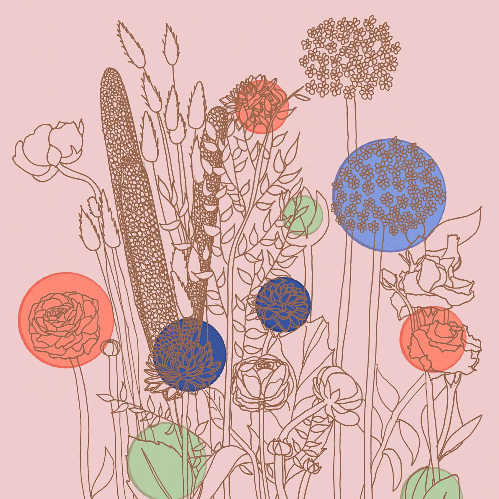 Florists choice illustration