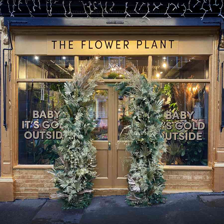 The Flower Plant Christmas 2020